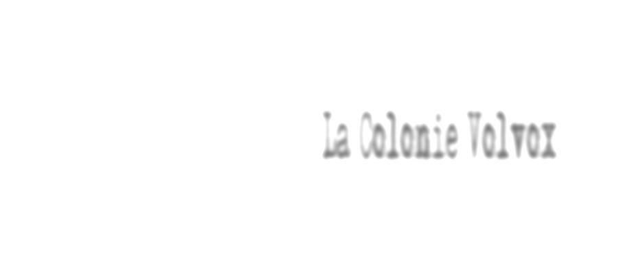 La Colonie Volvox