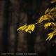 Adam the Tree October feat. Kasandra J