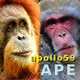 Apollo59 Ape