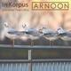 Arnoon - In Korpus(Glammer Twins Mix)