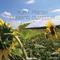 Dubbing Outdoor by Aura Fresh mp3 downloads