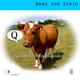 Beat von Stein Q - Haustier mit einem Buchstaben?
