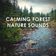 Calming Forest Calming Forest Nature Sounds: Peaceful De-Stress Study Sleep and Yoga Relaxation