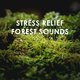 Calming Forest Stress Relief Forest Sounds: Calming Sleep Spa White Noise