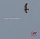Cristian Lange Sea Eagle