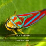 San Riser / Misfit by Dedrich Von Dorn mp3 download