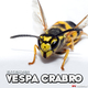 Extesizer Vespa Crabro