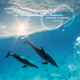 Groove Essence Dolphins
