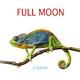 J. Torres Full Moon