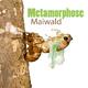 Maiwald Metamorphose