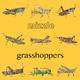 Mizzle Grasshoppers
