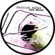 Patrick Arbez Dark Matter