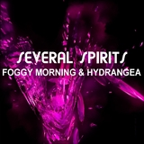 Foggy Morning and Hydrangea by Several Spirits mp3 download