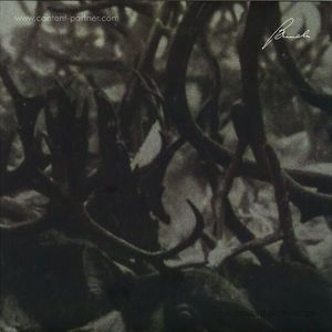 Company - Prosody (Brenda Records)