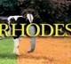 David Rhodes Band David Rhodes Band