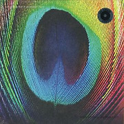osunlade-peacock