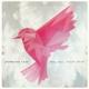 plebeian love big sky,litttle bird