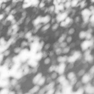 Pris - White Lies Cast Dark Shadows