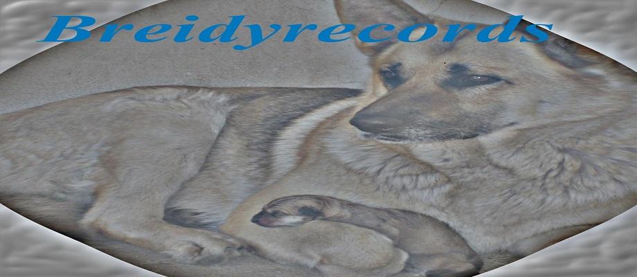 Breidyrecords