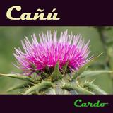 Cardo by Cañú mp3 download