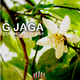 G Jaga Coming Your Way